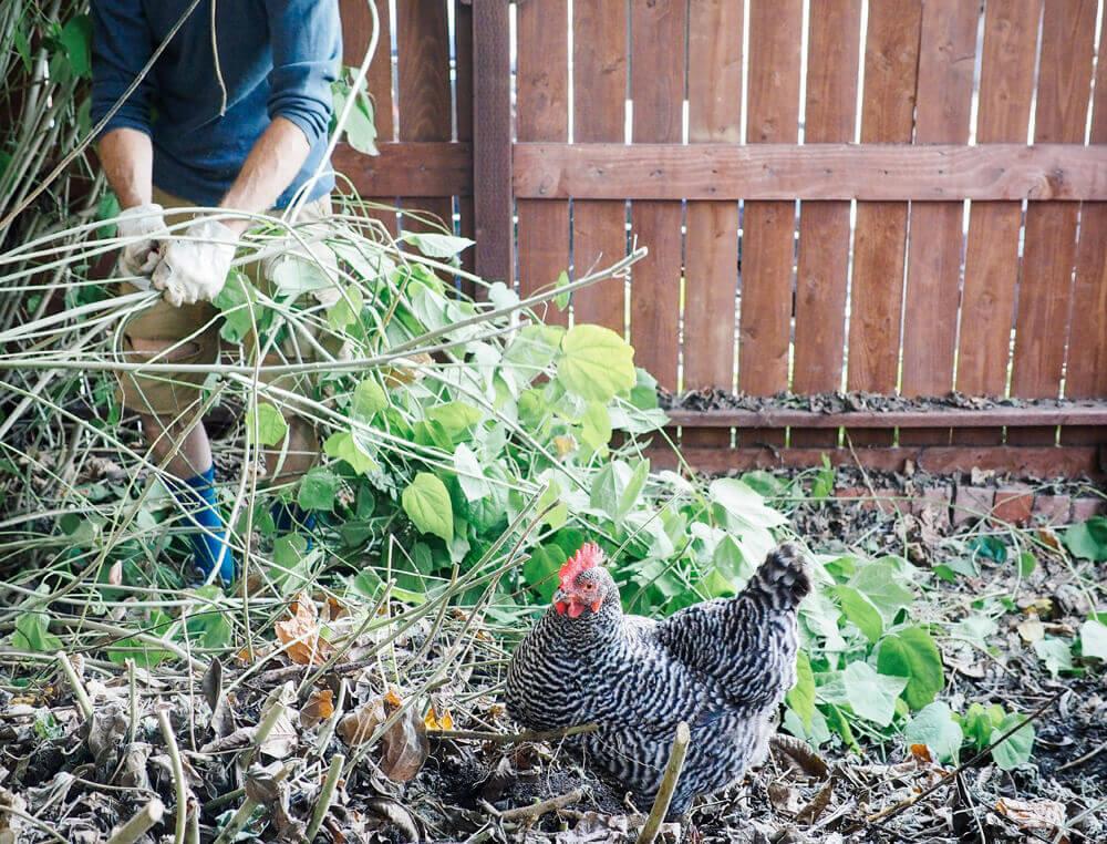 Checklist for your spring garden tune-up