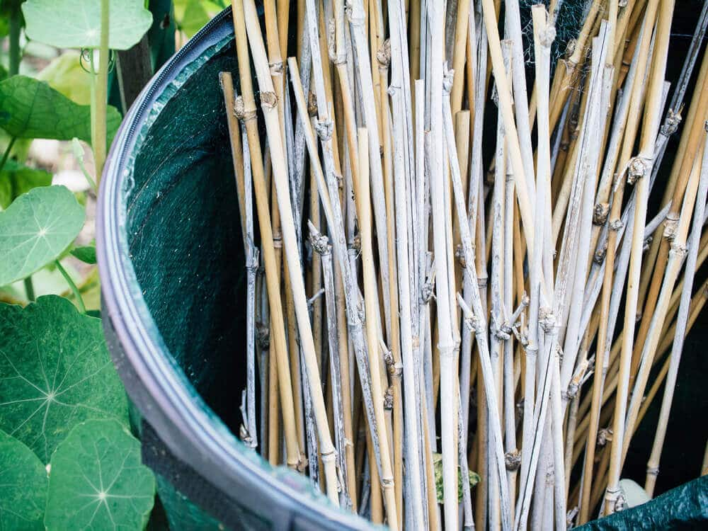 Repurpose bamboo trimmings into garden stakes