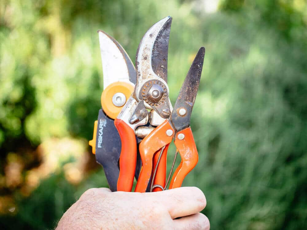 Inspect and clean gardening tools