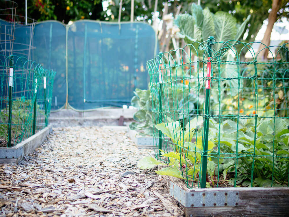 My favorite fences to keep out critters, caterpillars, and birds (no DIY needed)