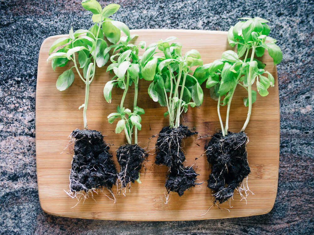 Divide your supermarket herbs into several smaller sections