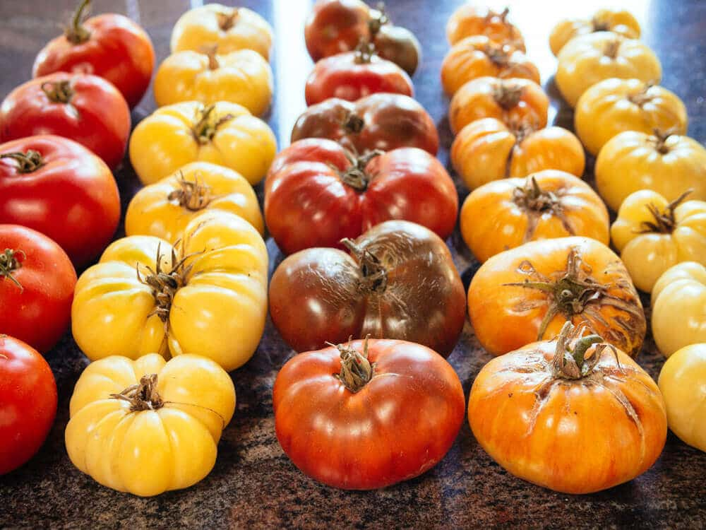 A rainbow of homegrown heirloom tomatoes