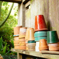 Why I Don't Wash My Plant Pots (and You Don't Need To Either)