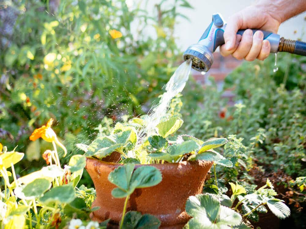 Surviving a heat wave: 6 hot weather watering tips