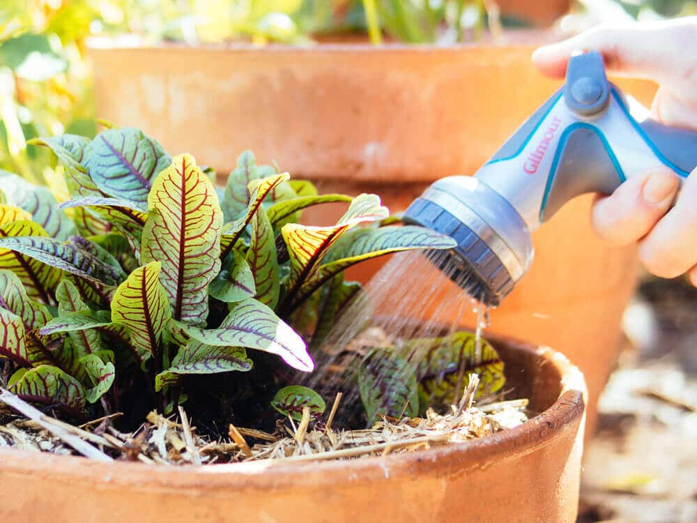 Water container plants more frequently than those in the ground