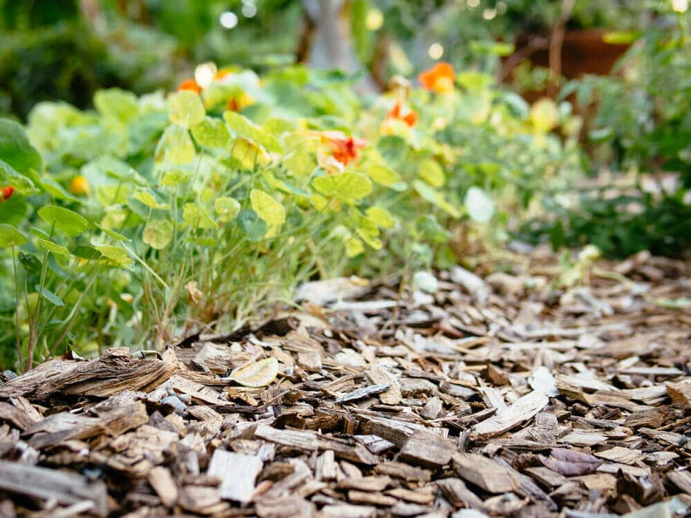 Lay a thick layer mulch to conserve moisture, regulate soil temperature, and reduce the spread of disease in the garden