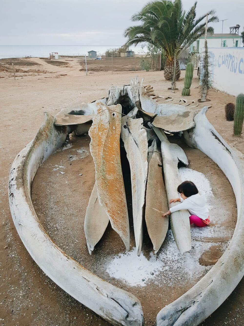 Playing on a whale skeleton