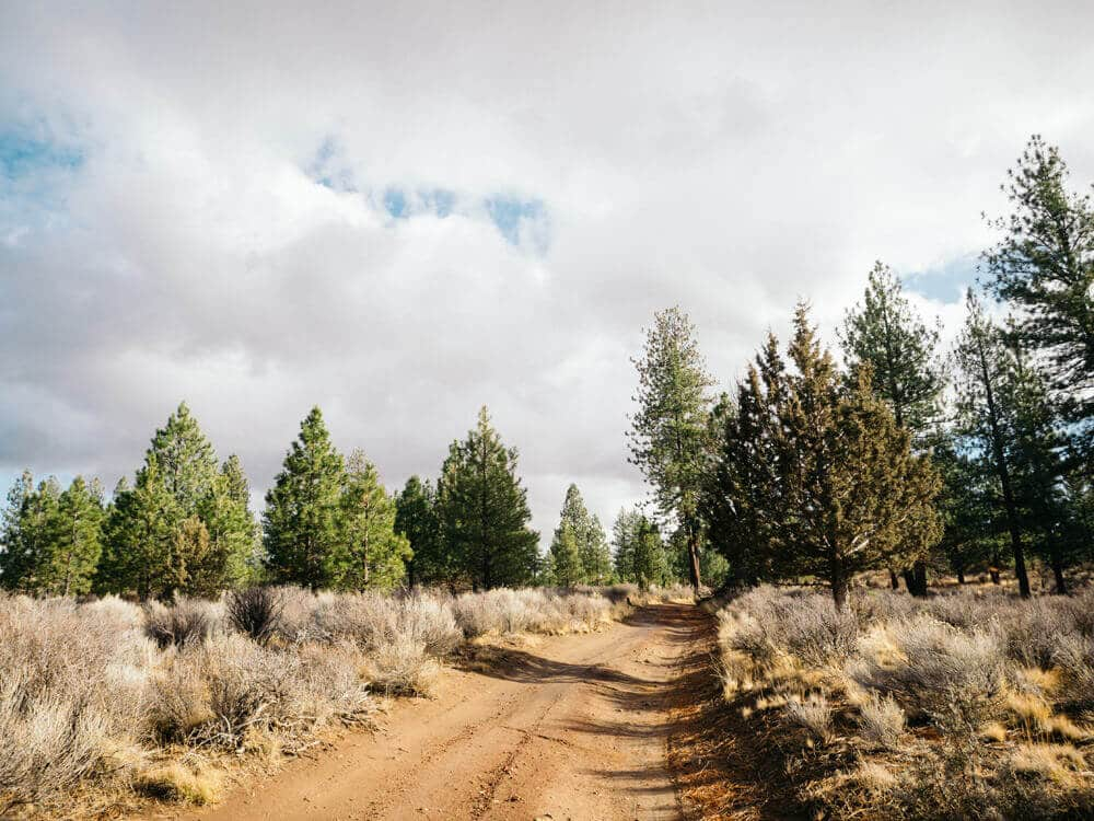 In search of a Christmas tree in Deschutes National Forest