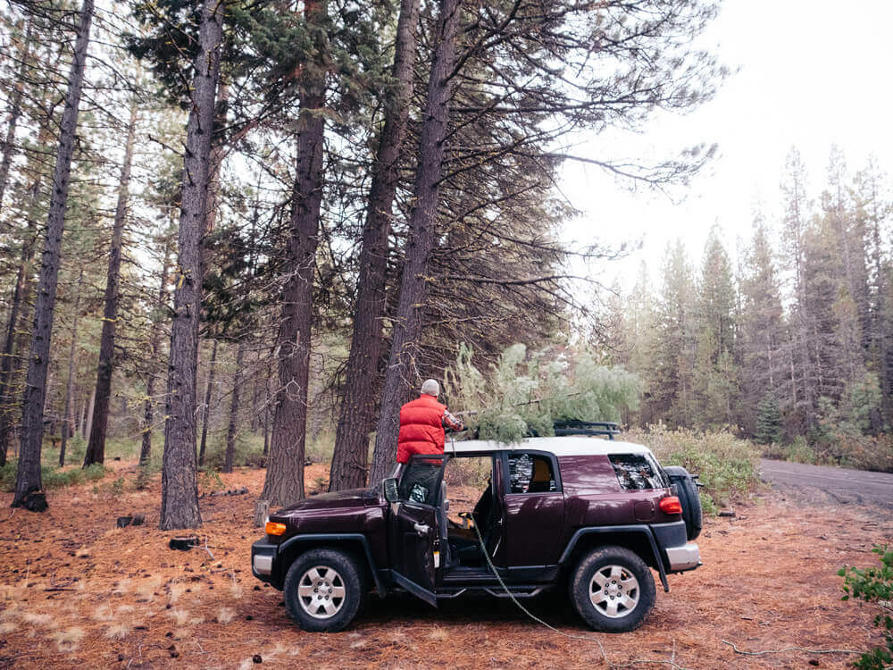 You can cut down your own Christmas tree in Oregon with a permit