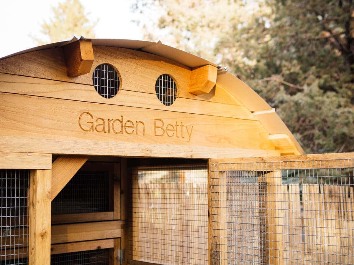 A tour of my new chicken coop