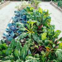 How Much to Plant in a Vegetable Garden to Feed a Family