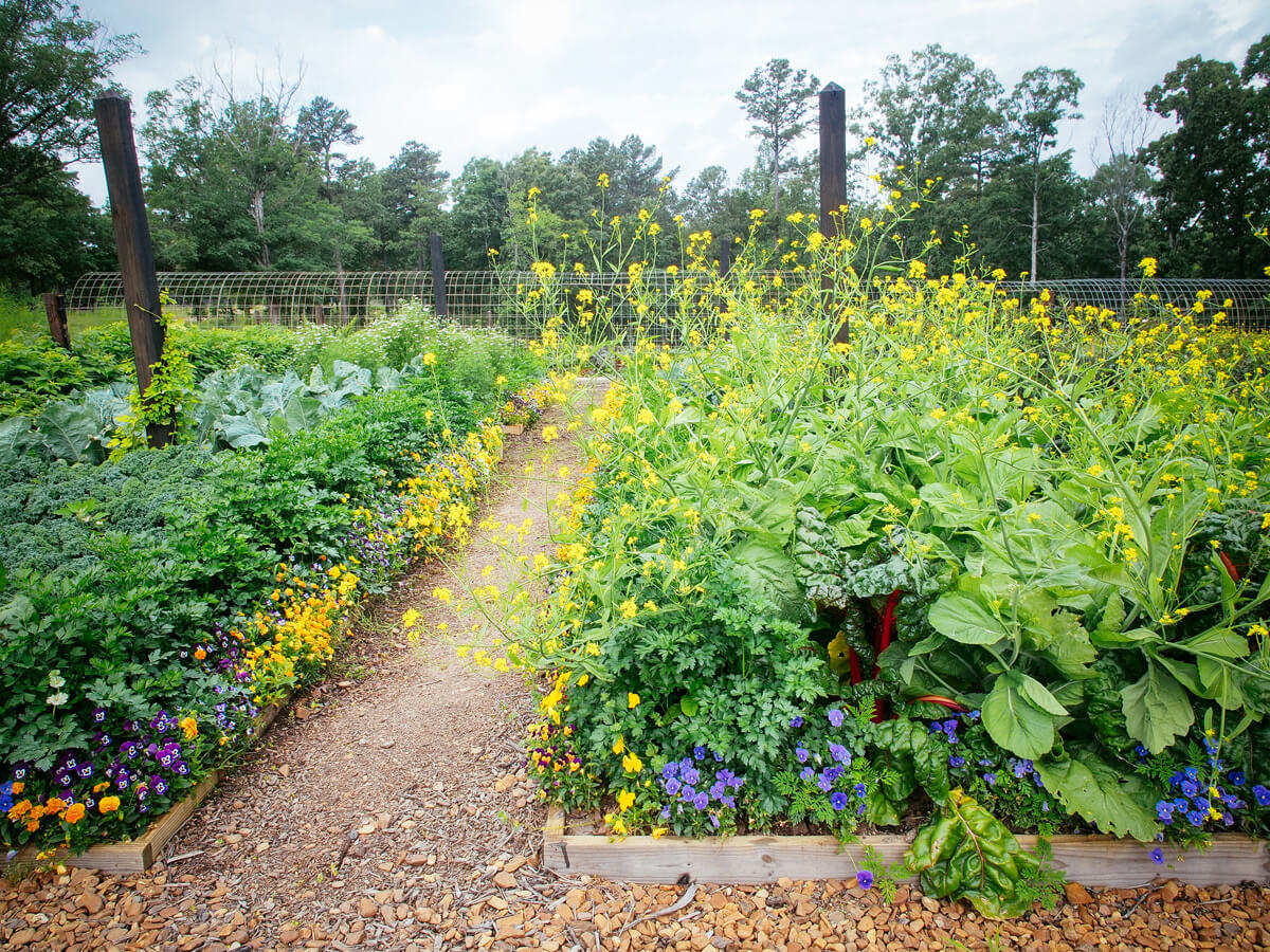 A well laid-out vegetable garden with beneficial flowers