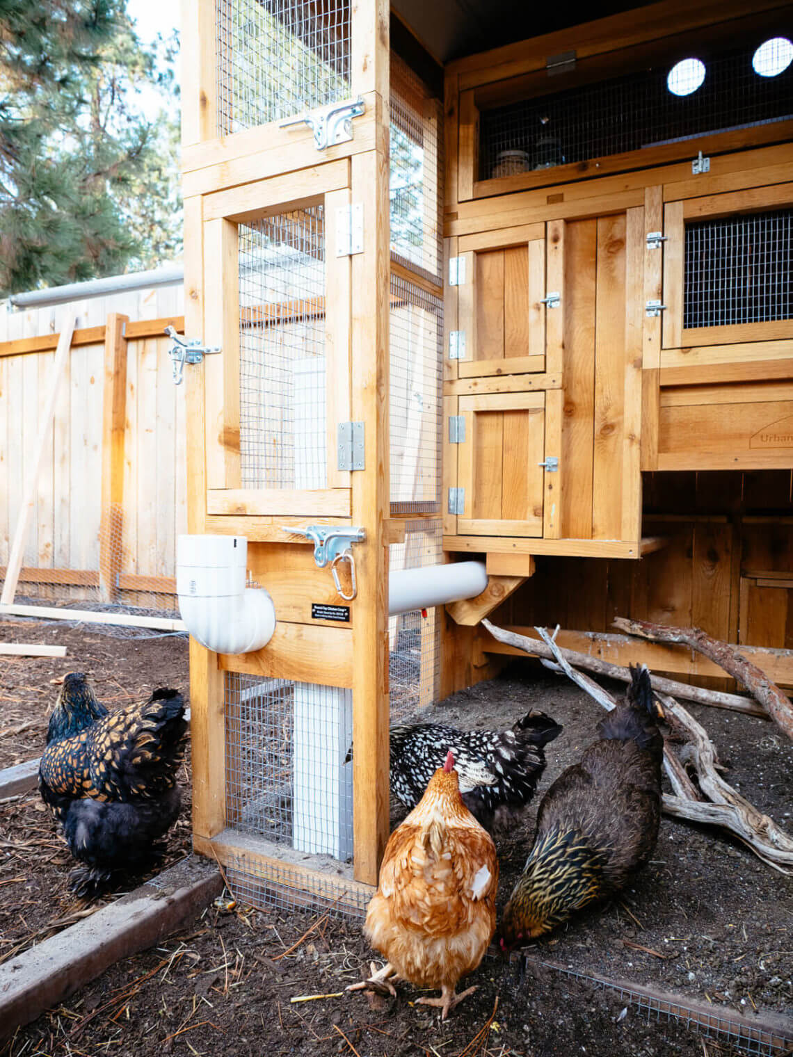 Security for Chicken Coops: Tips for Predator-Proofing and Protecting Your Backyard Flock