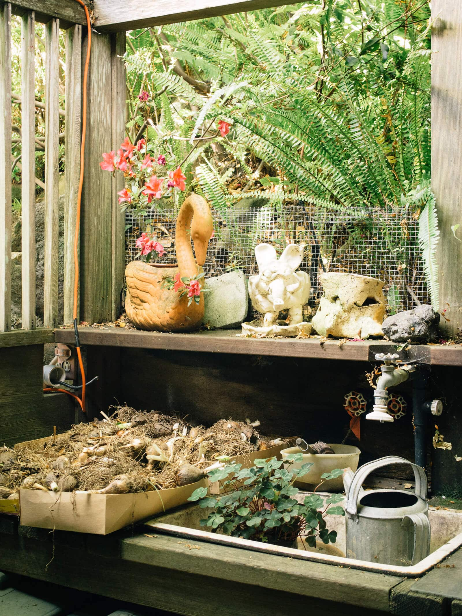A fall garden checklist for maximizing the season and winterizing your yard