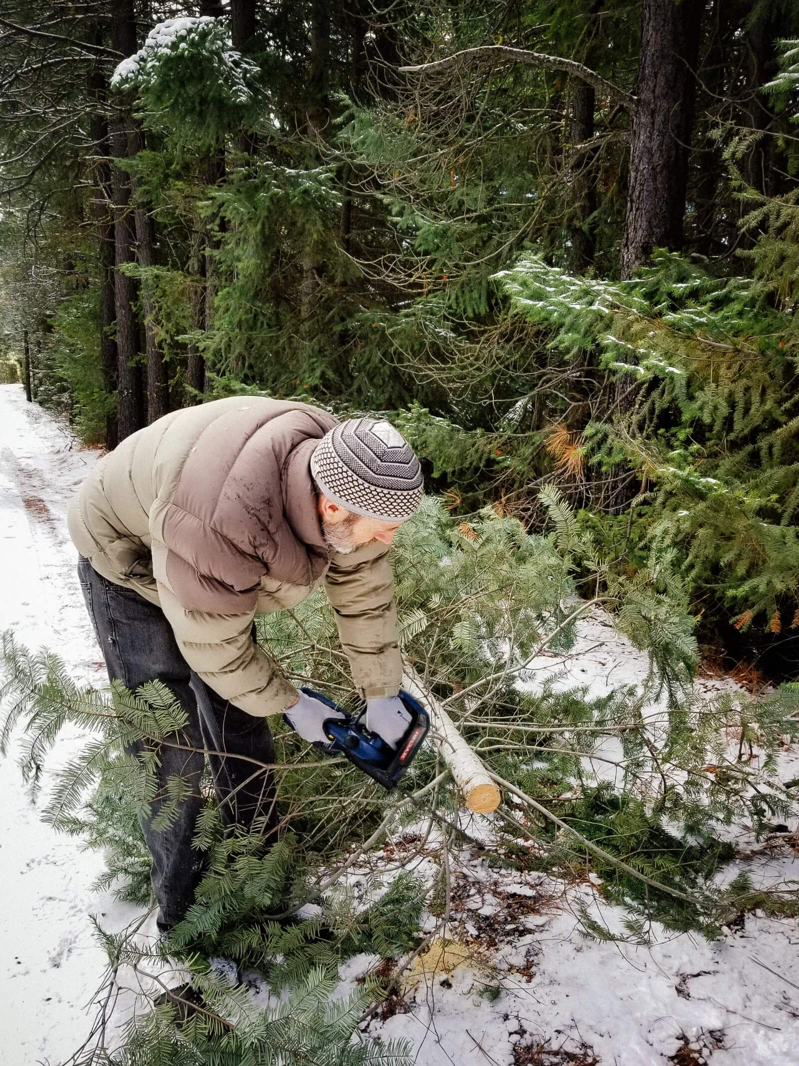 Cutting down our own Christmas tree