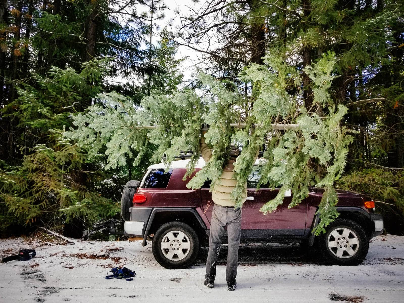This year's Christmas tree from Deschutes National Forest