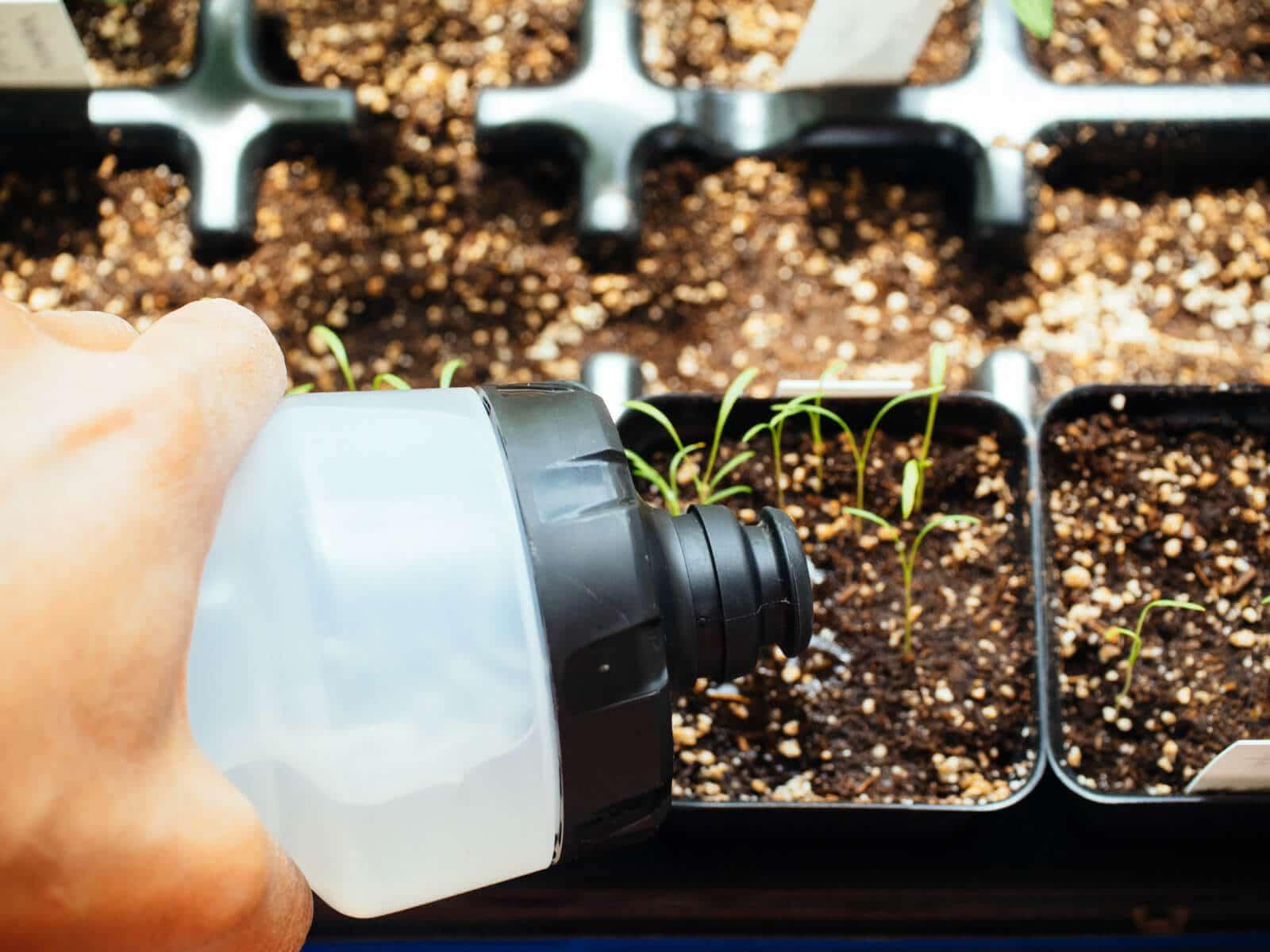 Keep seedlings moist
