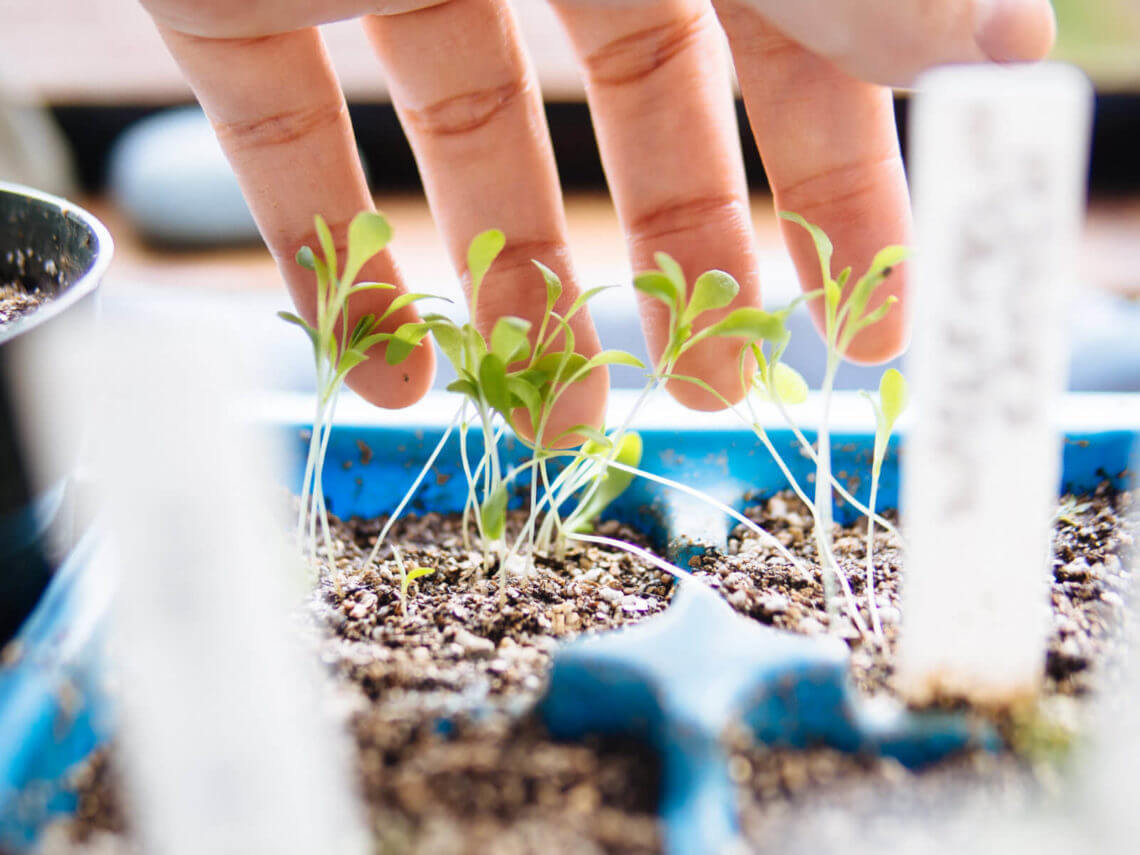 The ultimate seed starting guide: a roundup of Garden Betty's best tips and tutorials