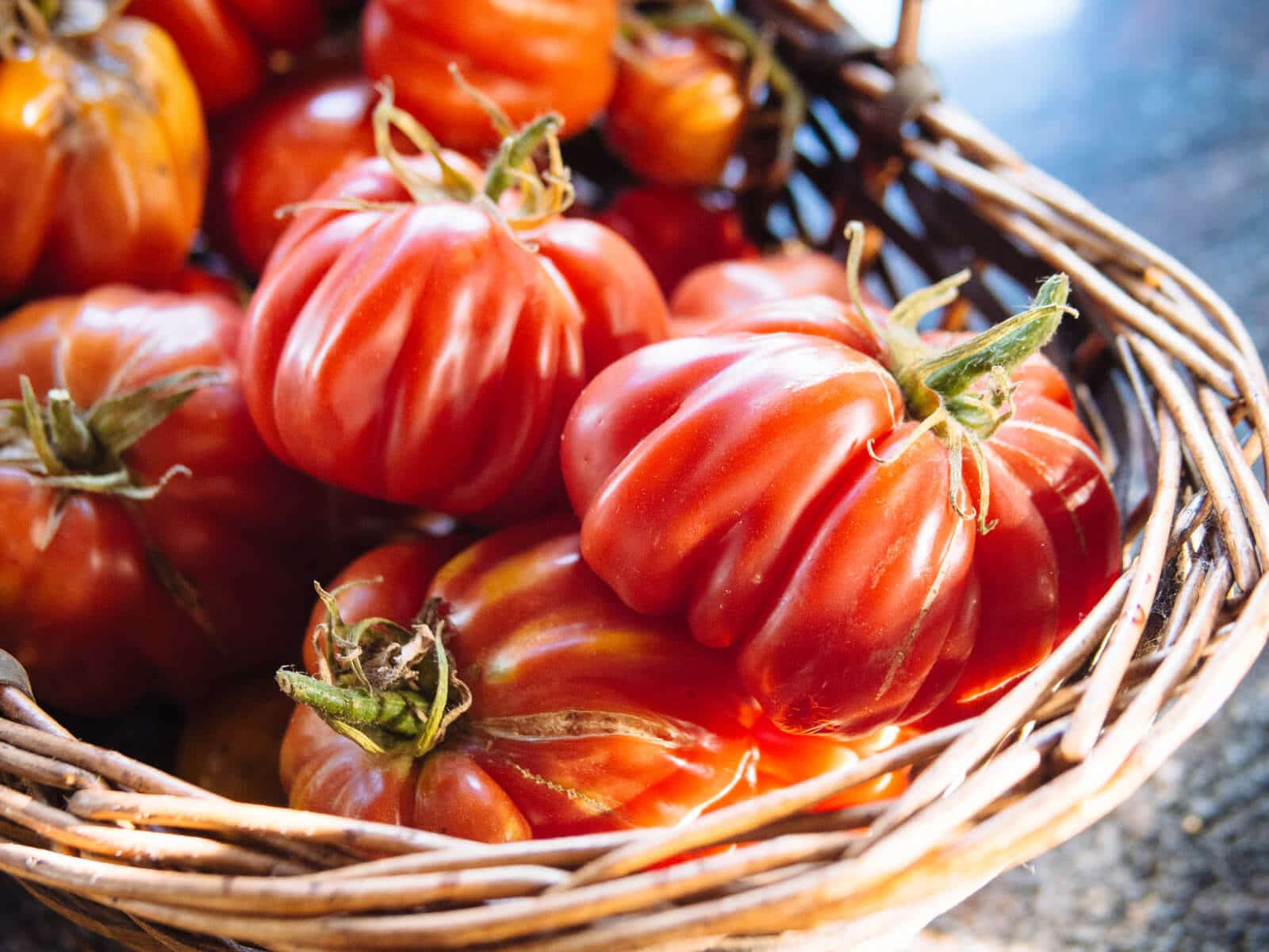 Tomato growing 101: 10 tips for a success harvest
