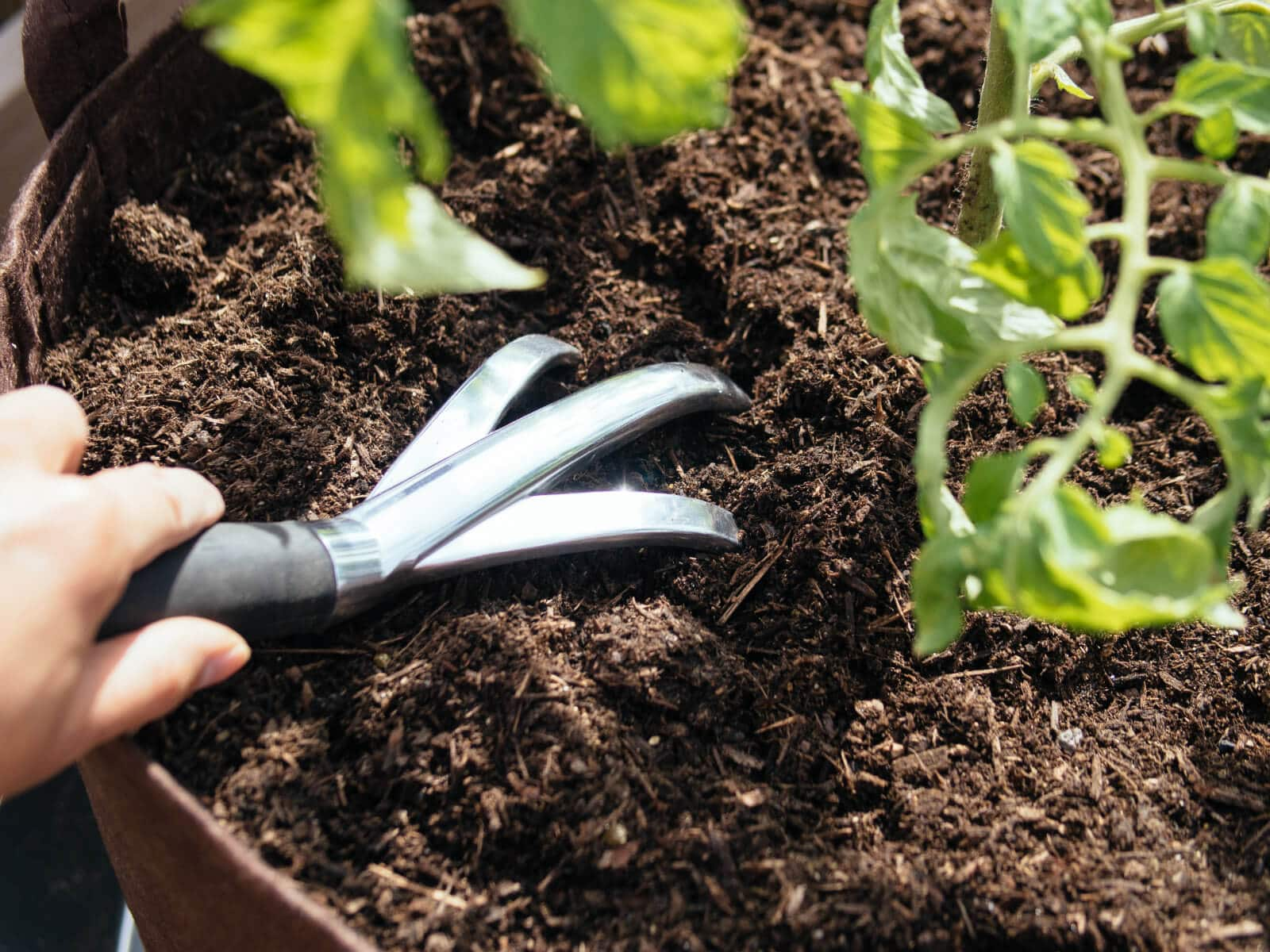 Amend the soil with plenty of nutrients