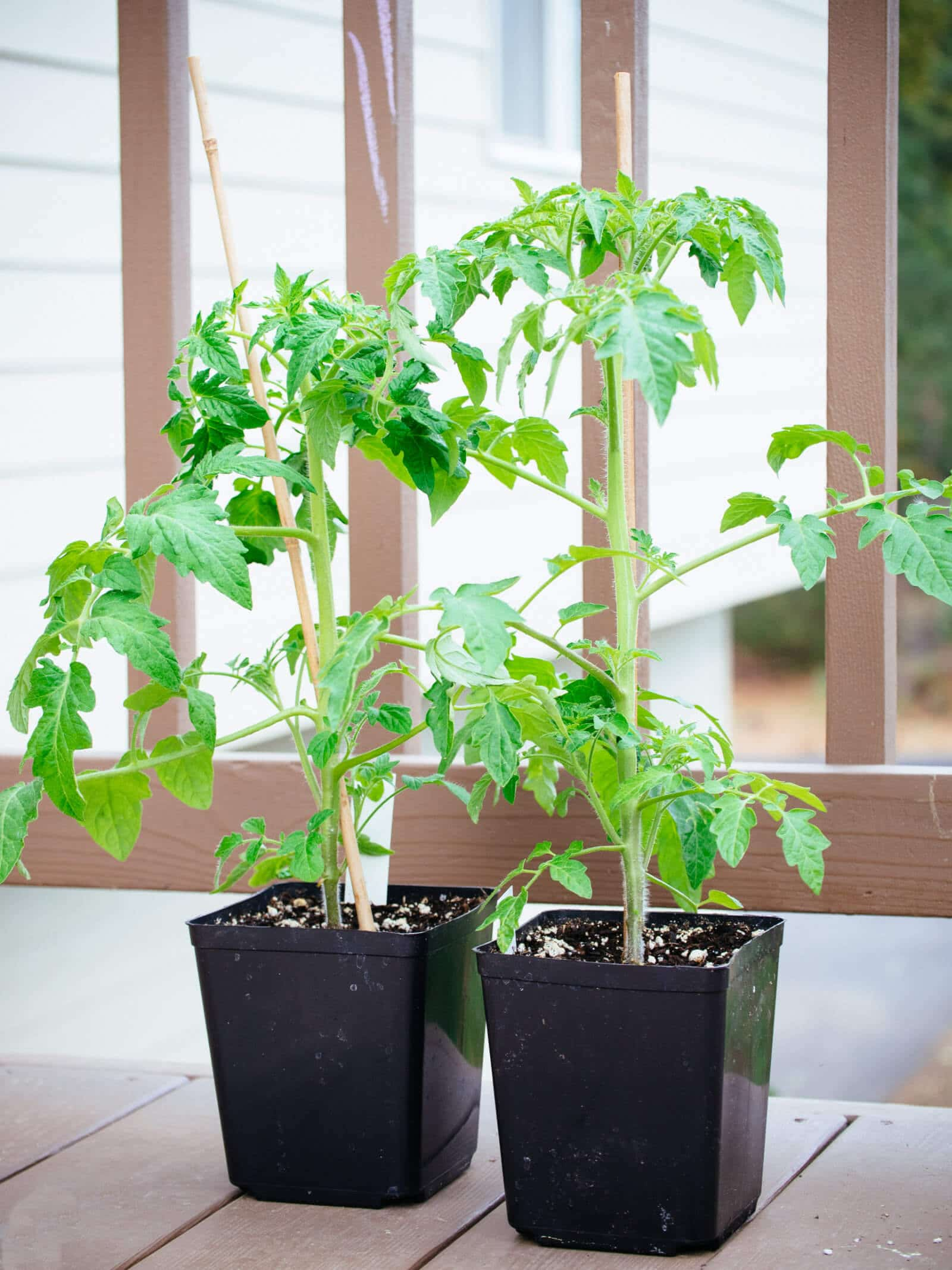 Tomato growing tips for the home gardener