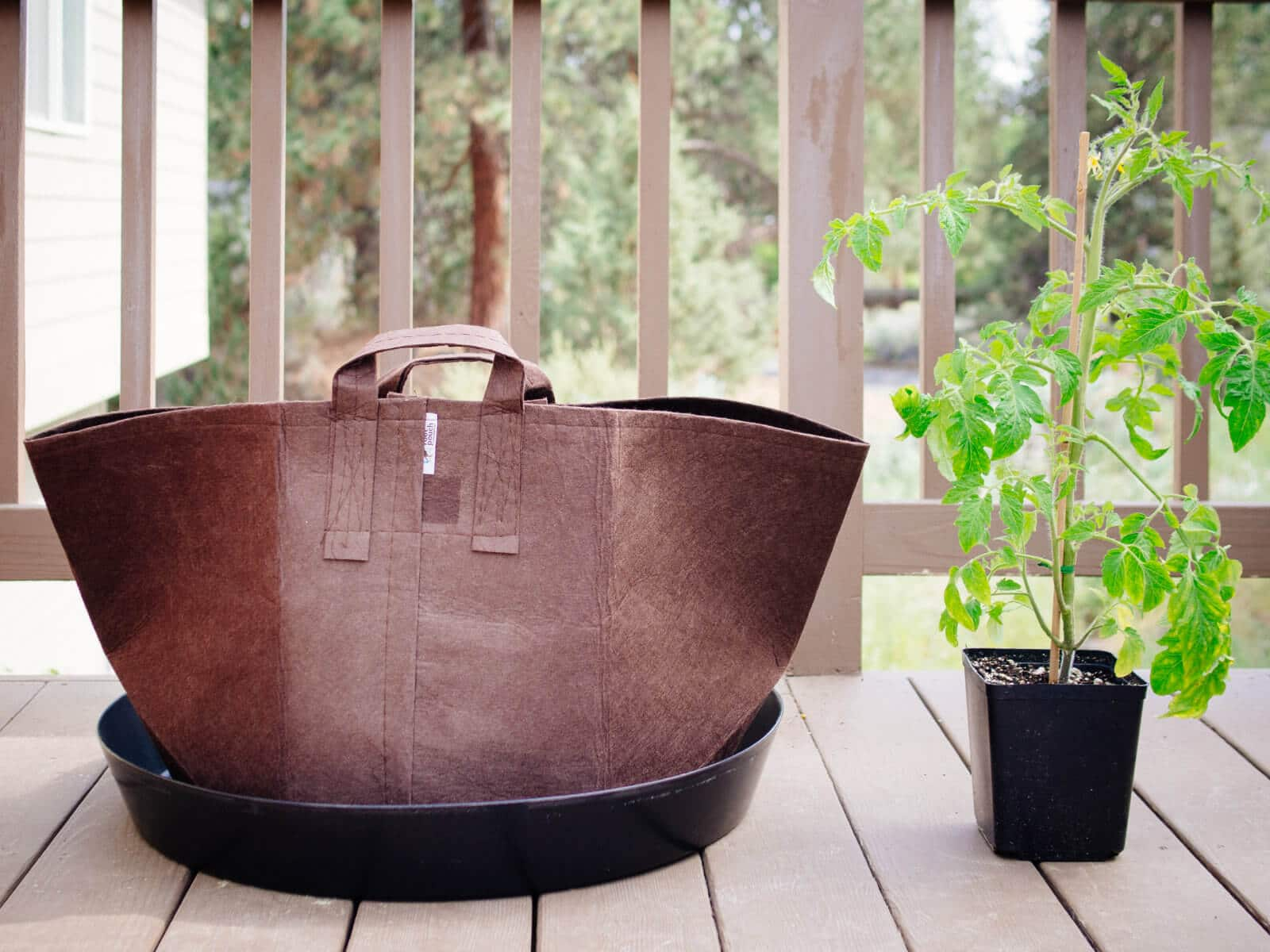 Use fabric pots for growing tomatoes