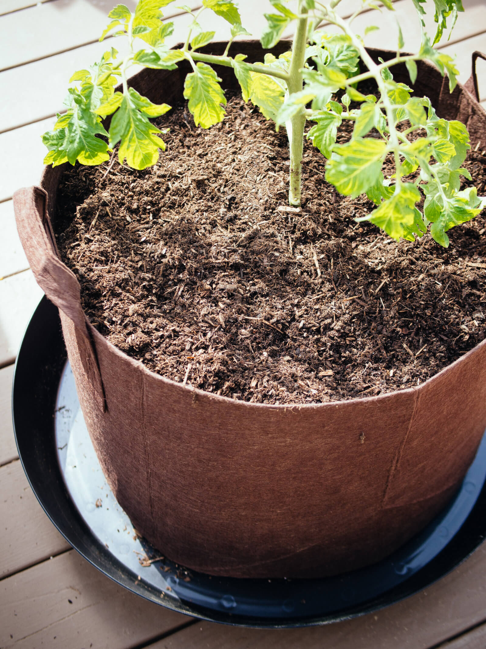 Use high-quality potting soil for growing tomatoes in containers