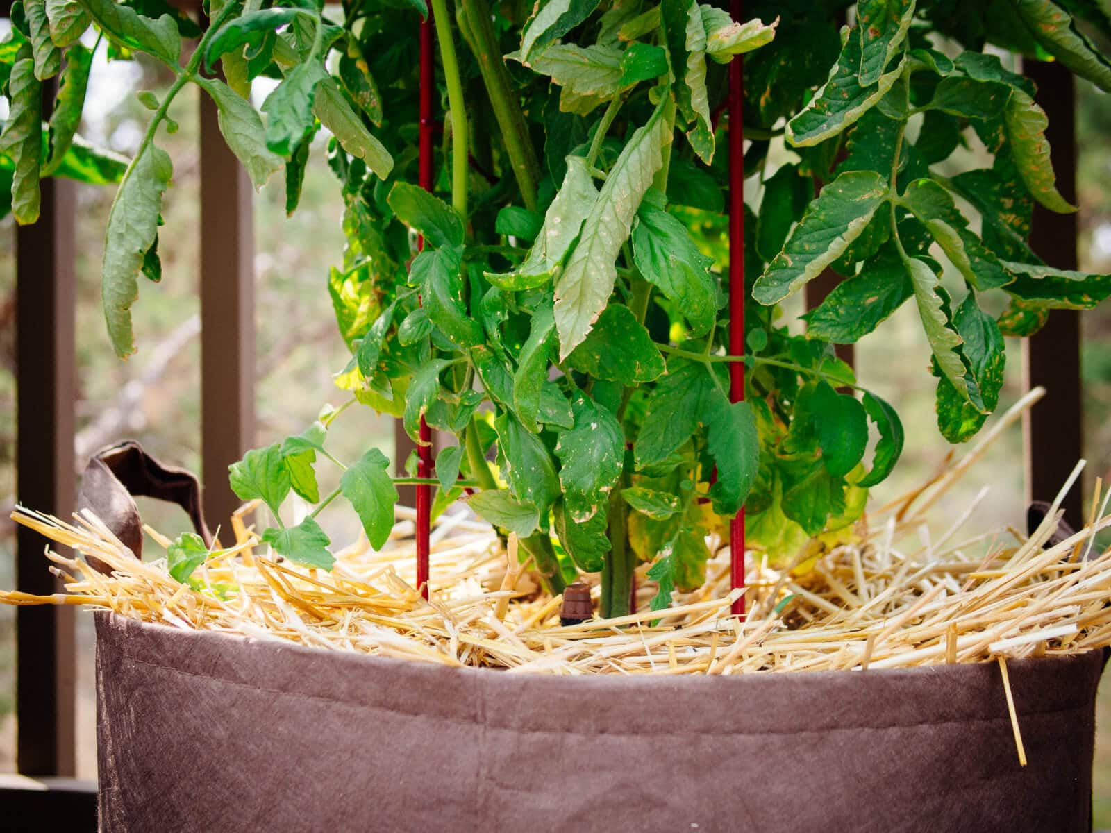 Mulch containers to help retain moisture in the soil
