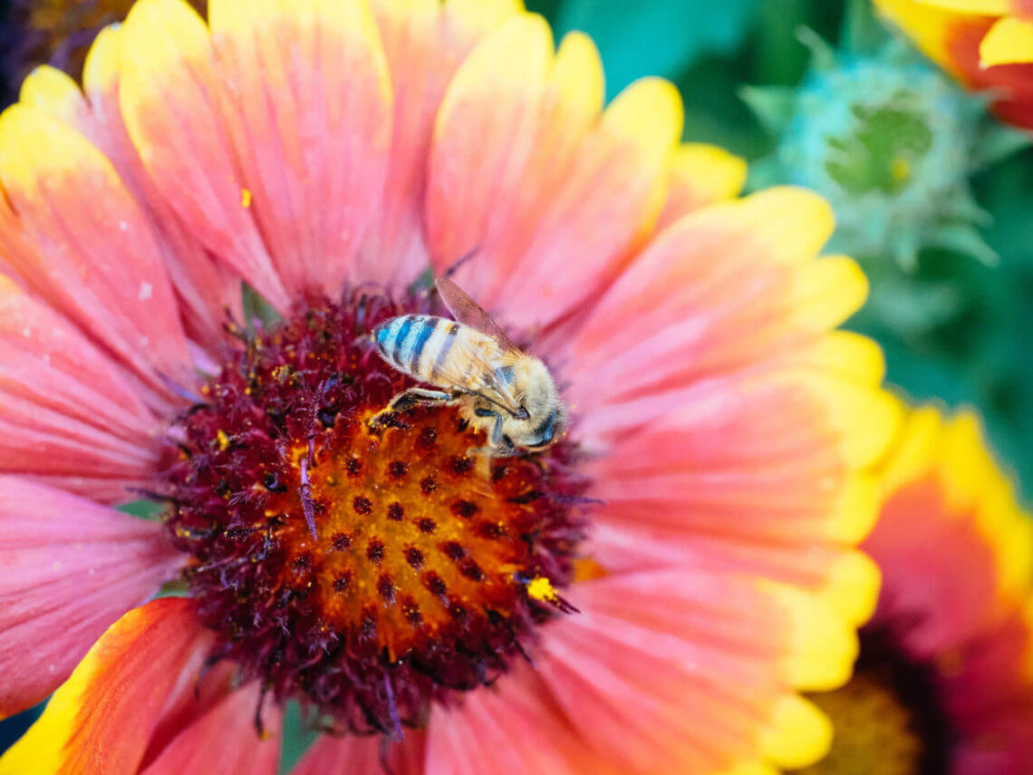 Foolproof five: the best plants to grow for bees