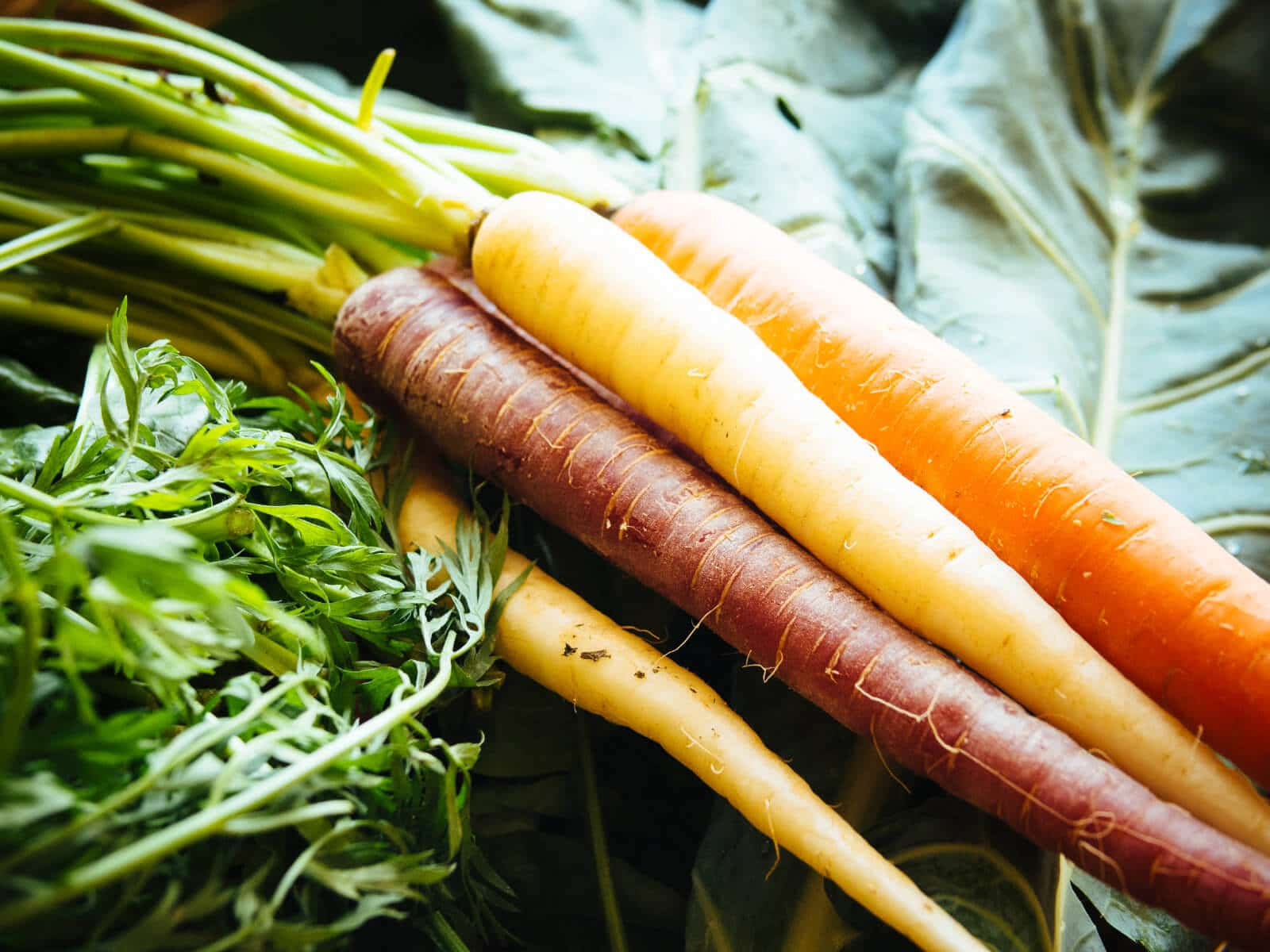 Carrots and carrot leaves are edible