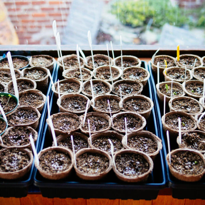 Use cheap paper pots from the dollar store for starting seeds