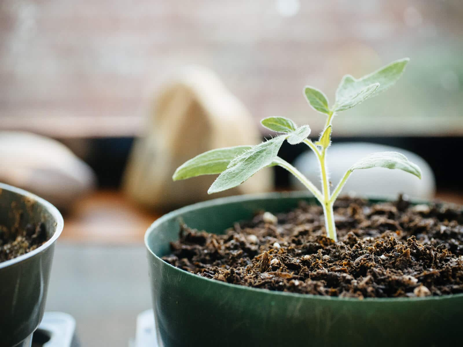 Make the best organic potting mix for less money