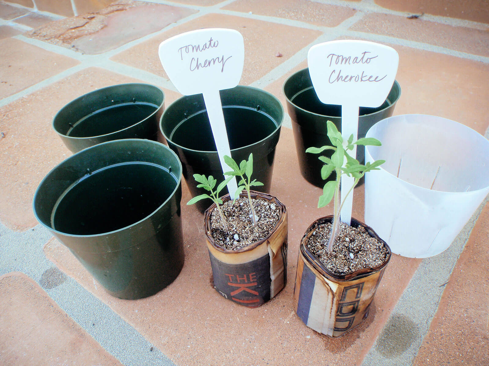 Gather clean 4-inch pots and high-quality potting soil to repot tomato seedlings
