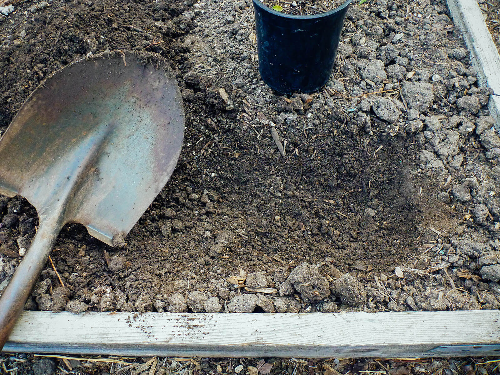 Dig a trench about 4 to 6 inches deep, with one end a bit deeper to hold the root ball