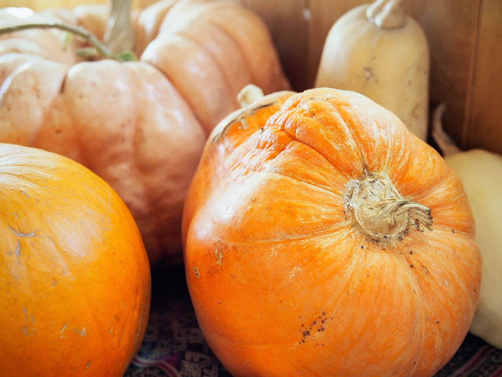 Close-up of various orange and yellow winter squash in storage