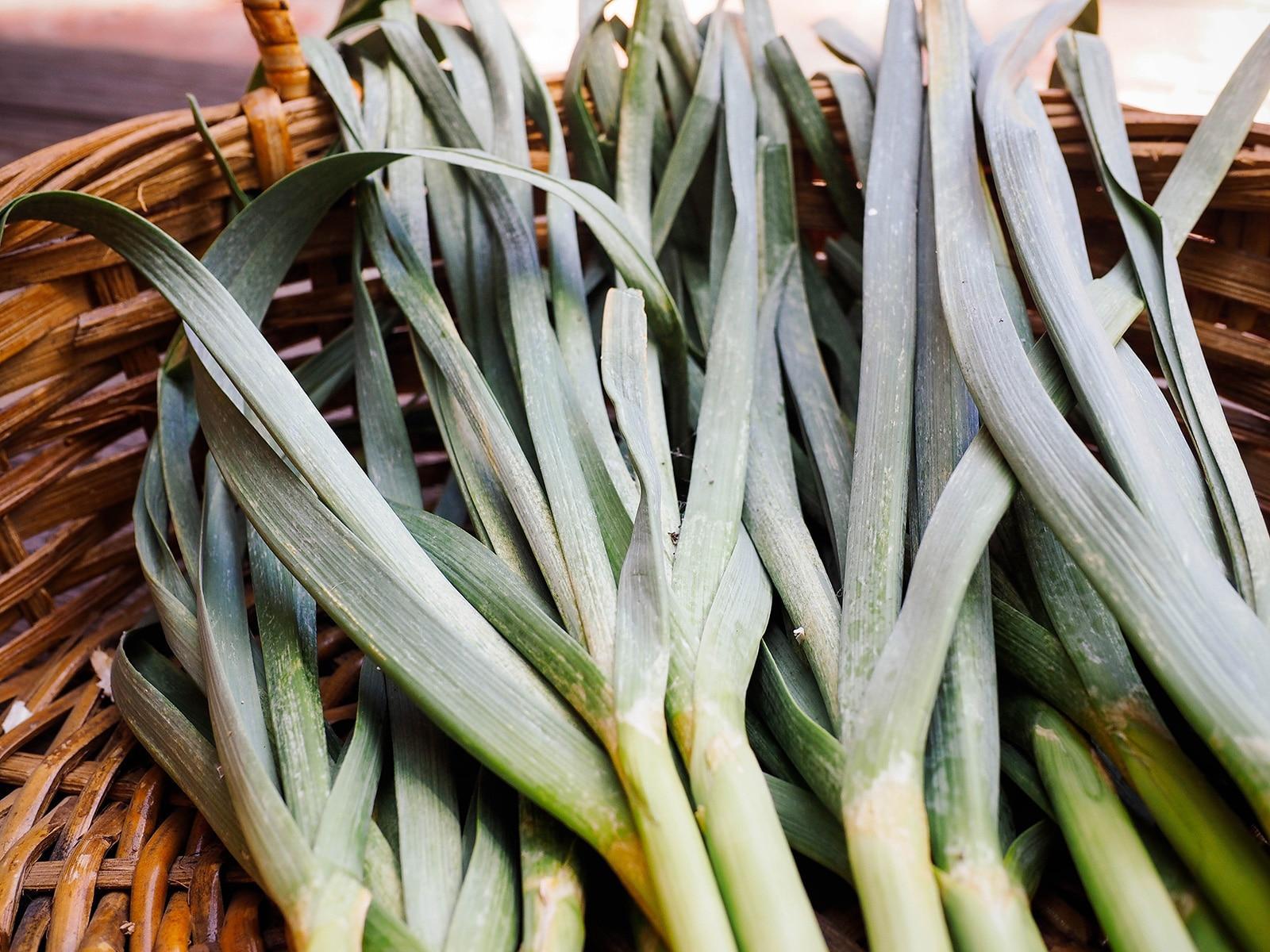Bundle of green garlic tops in a basket