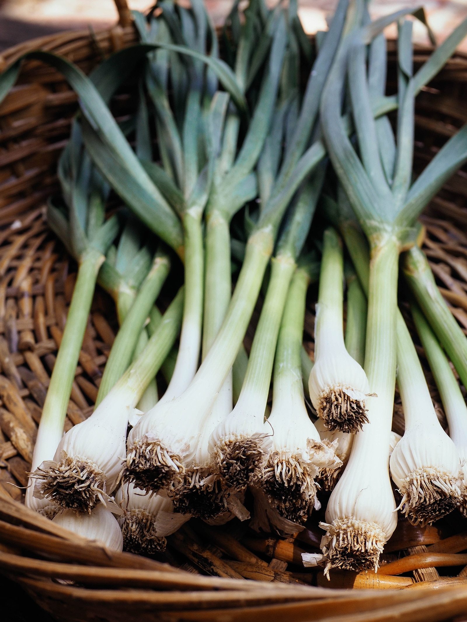 Undivided bulbs on a homegrown harvest of spring-planted green garlic