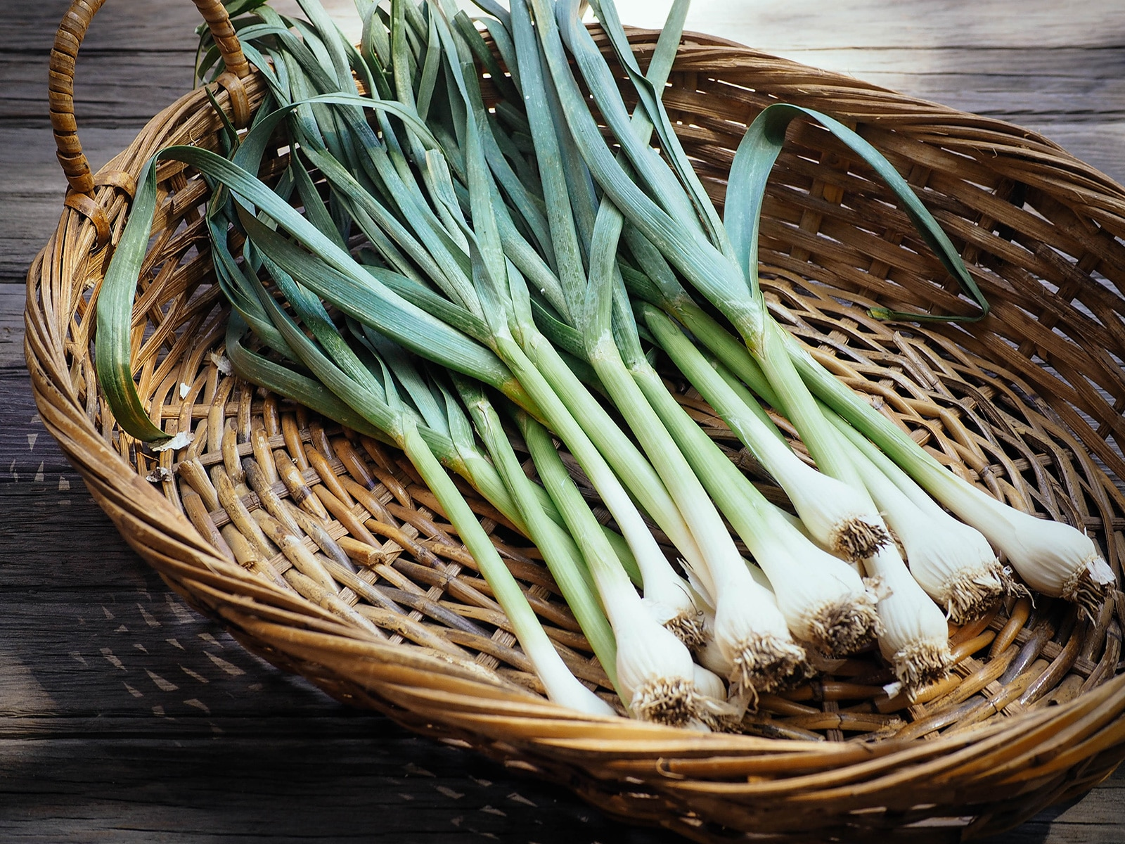 Basket of homegrown spring garlic, also called green garlic