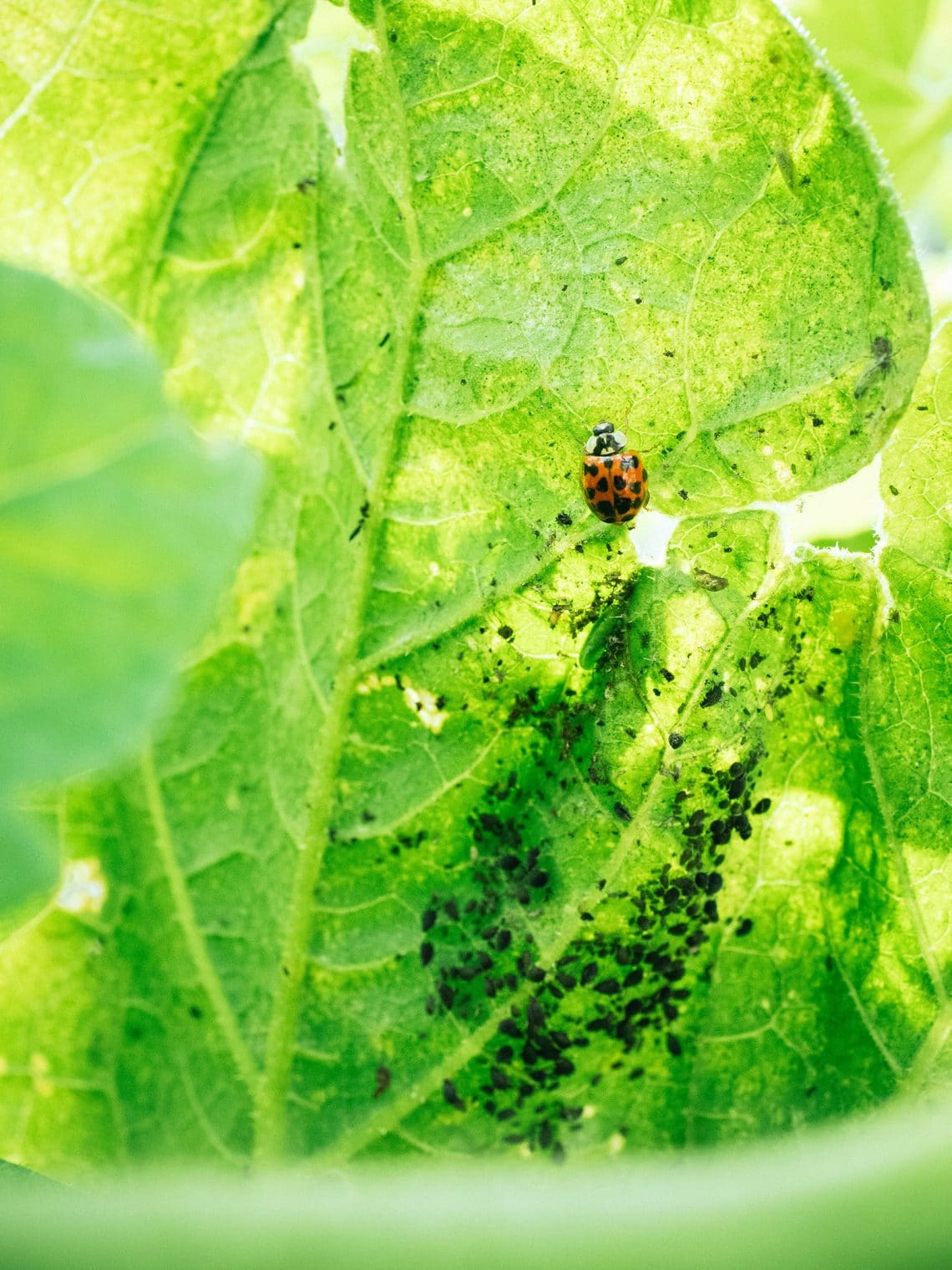 3 easy recipes for attracting beneficial insects to your garden