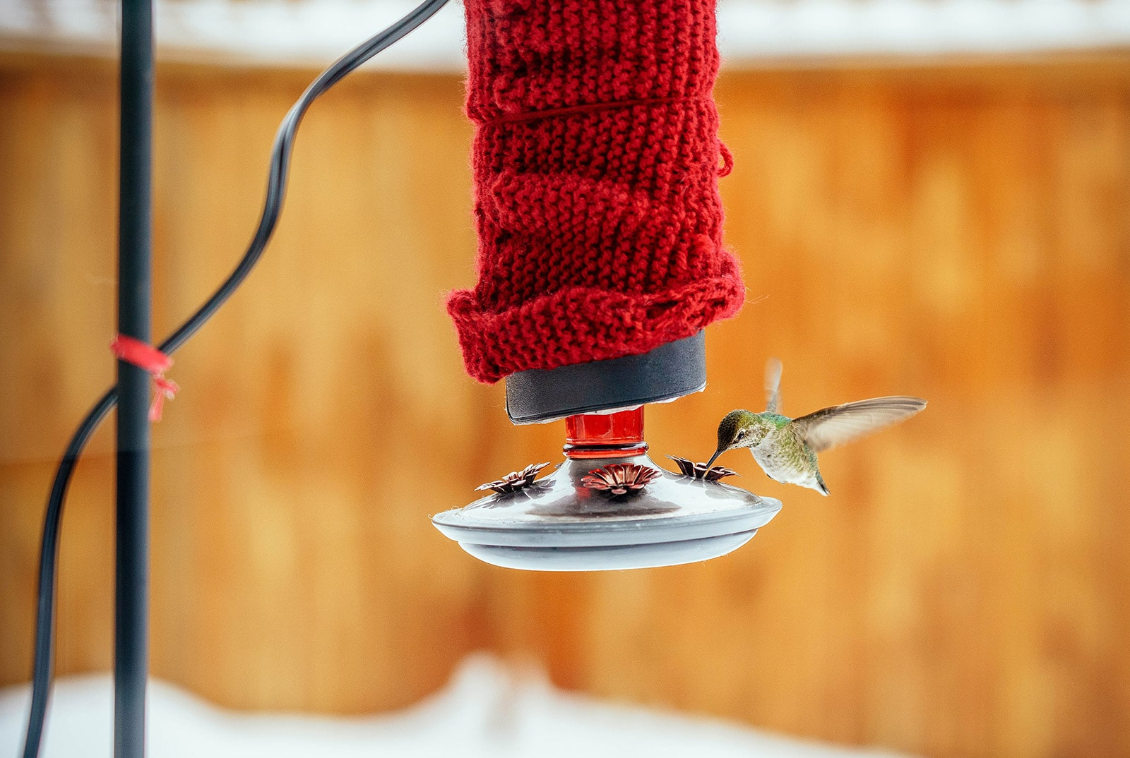 Hummingbird feeder in winter, wrapped in red knit sweater for insulation