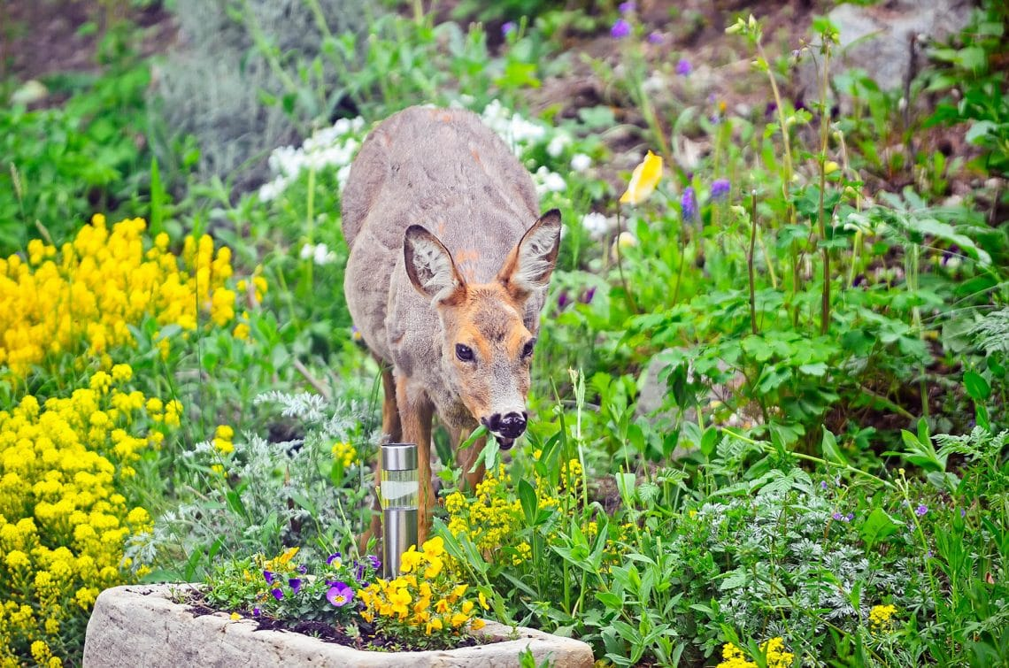 Super effective and humane ways to keep deer out of your garden