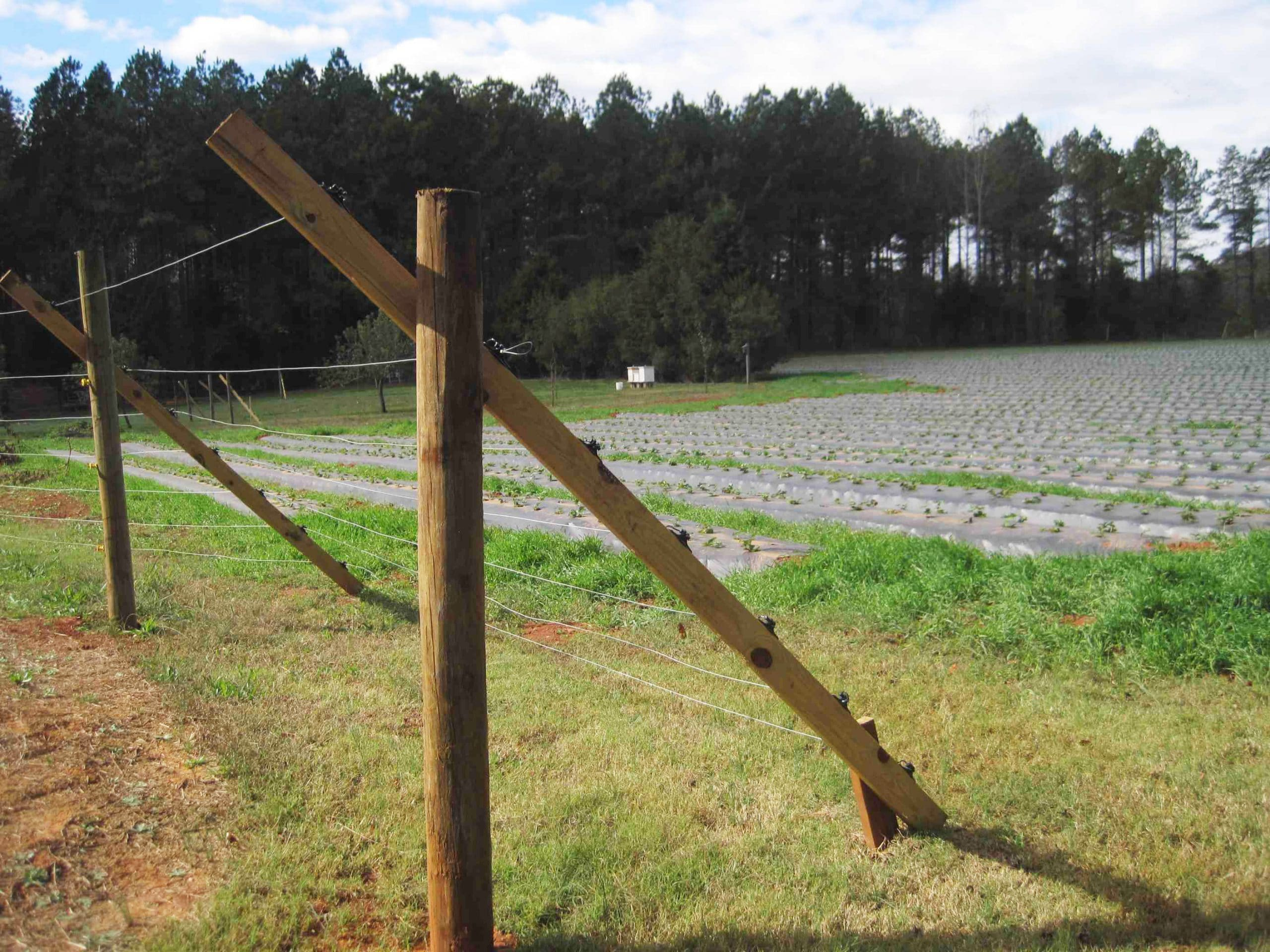 Slanted wire deer fence protecting a farm field